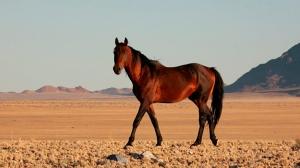 wild_horse_landscape_neweb