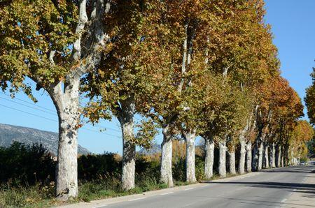 avenue-of-plane-trees-in-provence-531277472-5886331c5f9b58bdb388b0ae