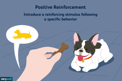 what-is-positive-reinforcement-2795412-5b4e2ffec9e77c003ec7cc63