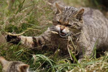 wildcats-3