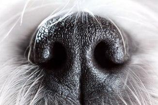 dog-scent-enrichment