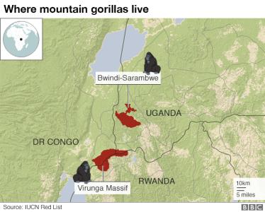 _104333304_mountain_gorilla_640-nc